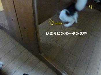 P1030449.JPG