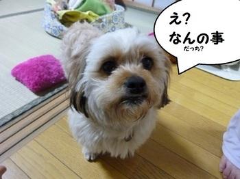 P1050248.JPG
