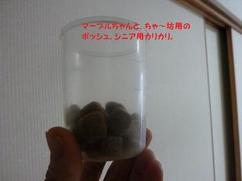 P1020322.JPG